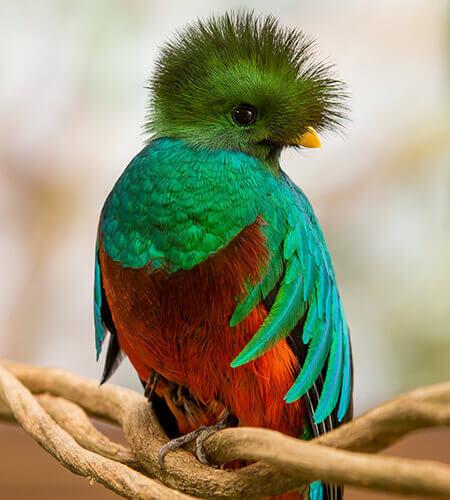 bird watching exotic birds nicaragua