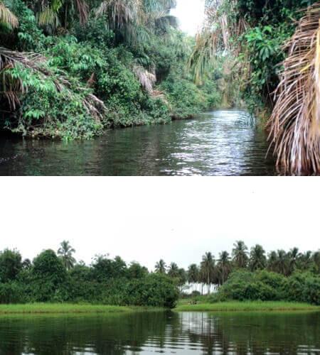 Rivers of Nicaragua jungle