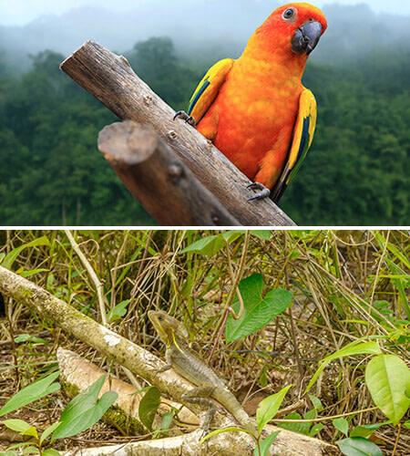 Bird watching Tour Nicaragua